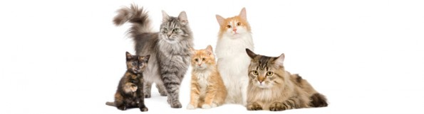 General Image - Cat Group