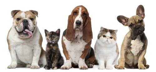 ePet Health Breed Info